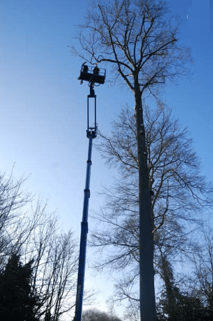Bromley tree services
