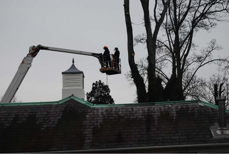 tree services in Bromley