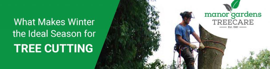 tree cutting in Croydon