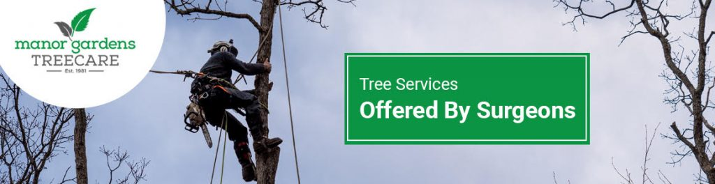 Tree Surgeons in Croydon